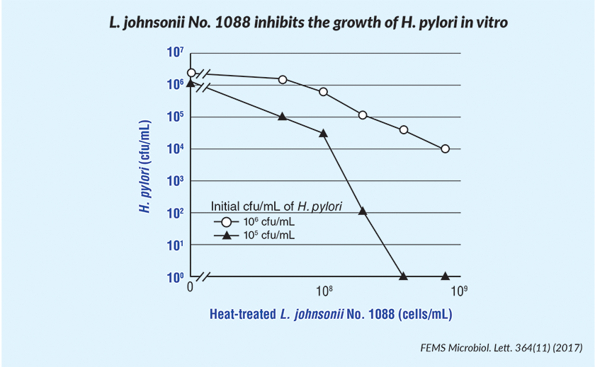 L. johnsonii No. 1088 could efficiently inhibit the growth of H. pylori