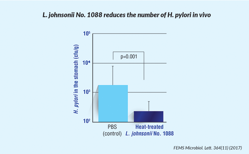 L. johnsonii No. 1088 reduces the number of H. pylori in vivo